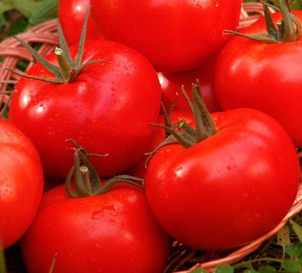 Какие сорта помидоров показали себя с лучшей стороны