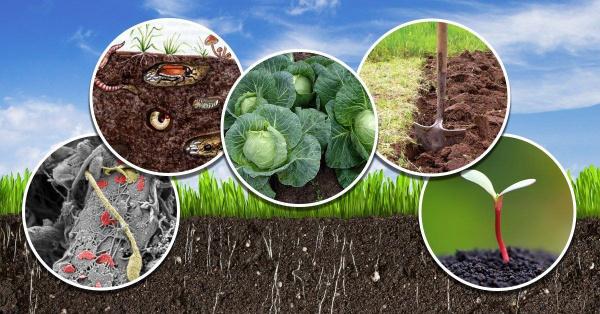 Мои советы, как повысить плодородие почвы
