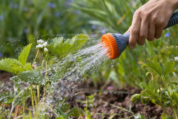 Как я слежу за поливом и регулирую влажность почвы